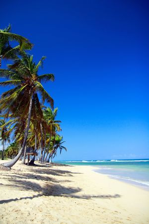 Tropical beach with palm trees photo