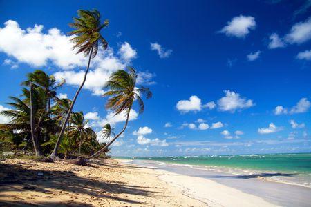 playas tropicales: Cocoteros y playa tropical