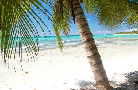 republic of dominican: Palm on calm caribbean sea, Dominican Republic Stock Photo