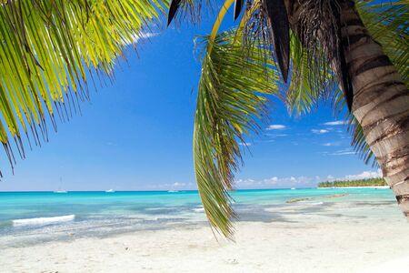 Palm on caribbean beach, Dominican Republic  photo
