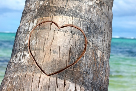 bark carving: Heart cutted on palm, closeup Stock Photo