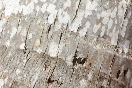 ruggedness: Palm crust background, macro