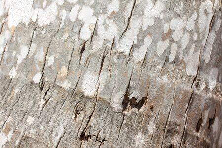 ruggedness: Palm sfondo di crosta, macro