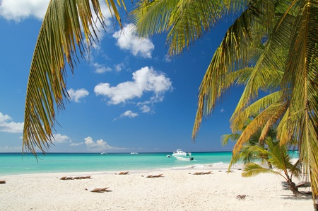 Calm beach on caribbean sea on island Saona, Dominican Republic  photo