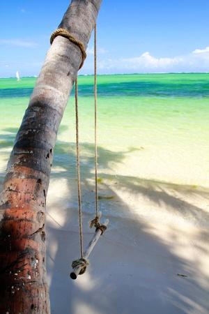 Swing on palm tree near caribbean sea photo