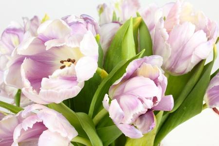 Tulips bouquet, closeup on white photo