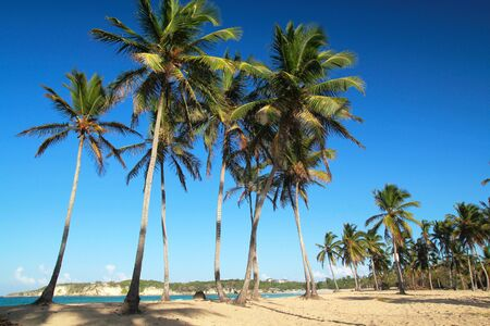 Wild beach with palms Macao, Dominican Republic photo