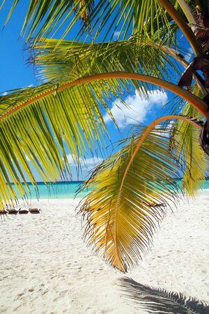 Tropical beach with palms, paradise  photo