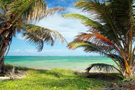 Beautiful palms on caribbean beach, atlantic ocean Stock Photo - 10452427