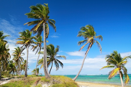 Palms on tropical beach, caribbean sea photo