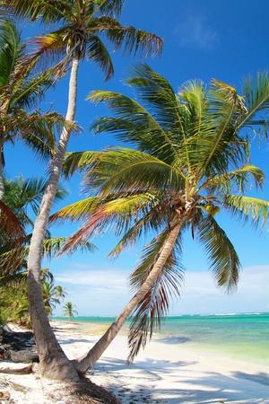 bahamas: Prachtige palmen op tropisch strand, Caribische Zee kust