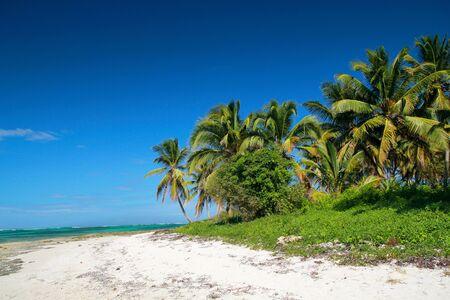Coconut palms on tropical beach, caribbean sea photo