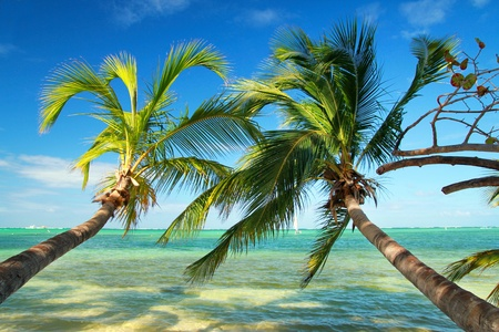 Beautiful palms on tropical beach, caribbean sea