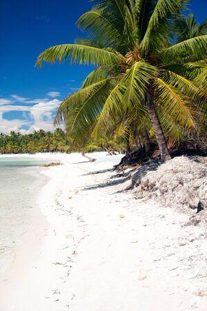 Beautiful caribbean beach with white sand, Saona photo