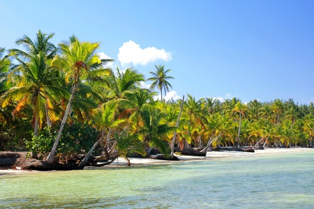 Palm jungle on tropical beach, caribbean photo