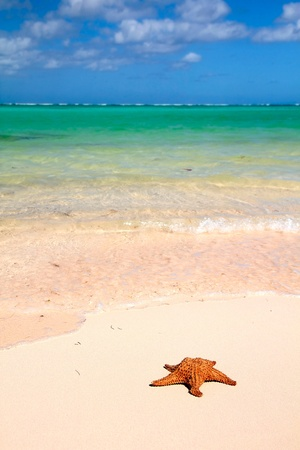 Red starfish on a  beautiful tropical beach photo
