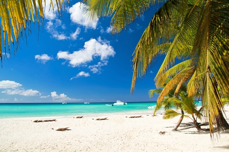 bahamas: Caribisch strand met palmen, paradijselijke eiland