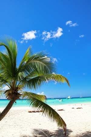 Tropical beach with palms, paradise island photo