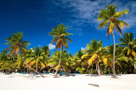 Beautiful caribbean beach on Saona island Stock Photo