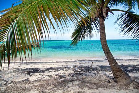 Caribbean lagoon with palm photo