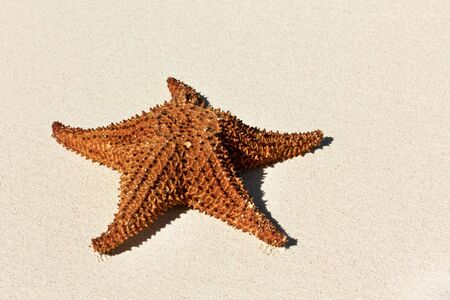 Starfish on a beach sand, closeup  photo