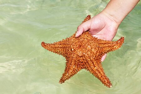Starfish in hand on caribbean beach  photo