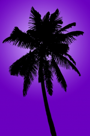 cancun: Silhouette of coconut palm isolated on purple, illustration