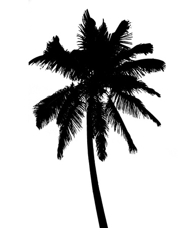 Silhouette of coconut palm isolated on white, illustration illustration