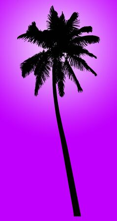 cancun: Silhouette of coconut palm isolated on violet, illustration
