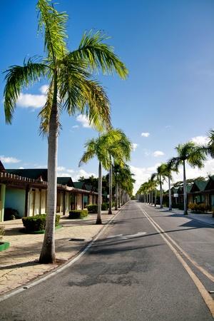 scheidingslijnen: Gele scheidingslijnen op weg op caribbean straat