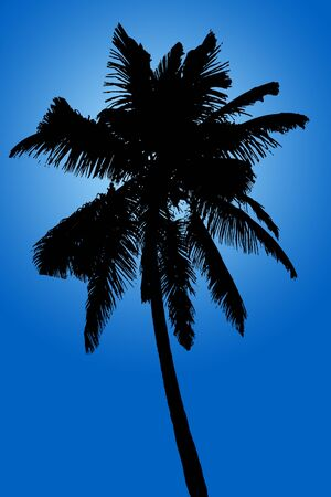 cancun: Silhouette of coconut palm isolated on blue background, illustration
