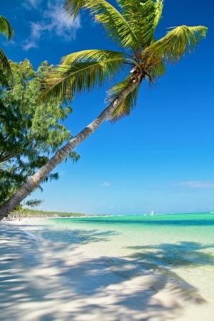 Seesaw on palm on caribbean sea beach