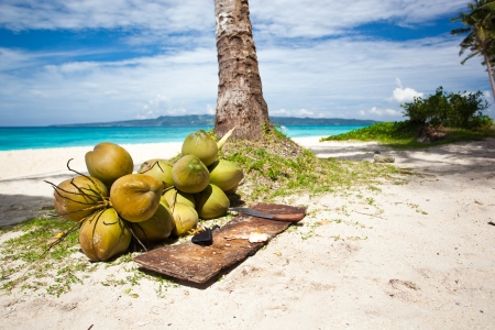Coconuts on beach under palm tree