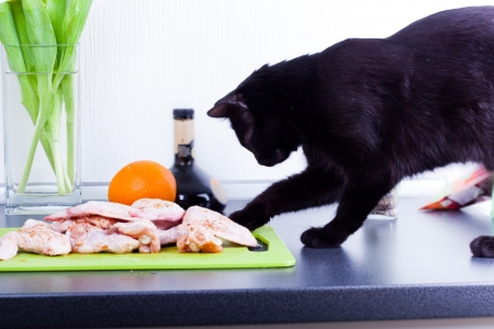 Black Cat stealing chicken wing photo