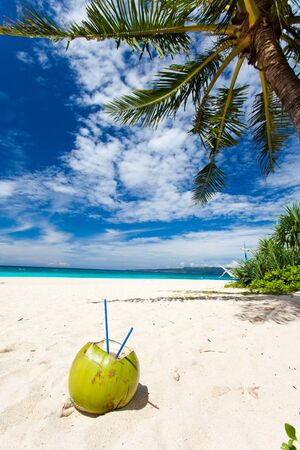Coconut on white sand beach under palm tree photo