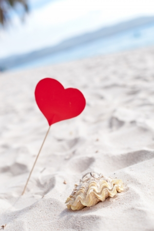valentine s day beach: Celebration Valentine s day on beach, rings on shell