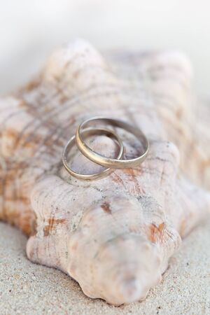 valentine s day beach: Celebration Valentine s day on beach, rings on shell
