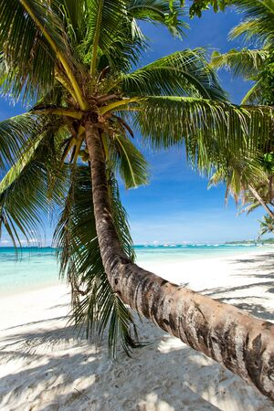 Beautiful palm on beach with white sand photo