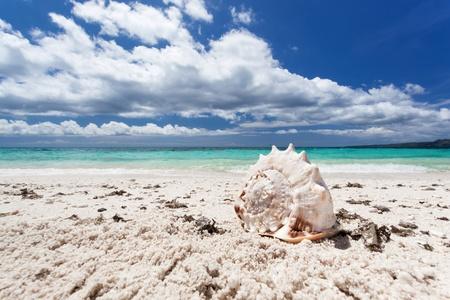 Seashell on tropical beach, Boracay, Philippines  photo