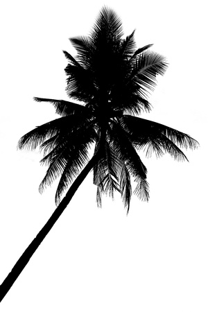 palmtree: Illustration of palm tree silhouettes, isolated on white