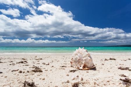 Seashell on tropical beach, Boracay photo