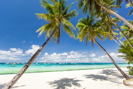 Tropical beach with beautiful palms and white sand, Philippines, Boracay Island photo