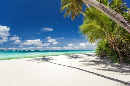Tropical beach with palm and white sand, Philippines photo