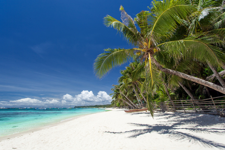 Tropical coastline with beautiful palm and white sand, Philippines, Boracay Island photo