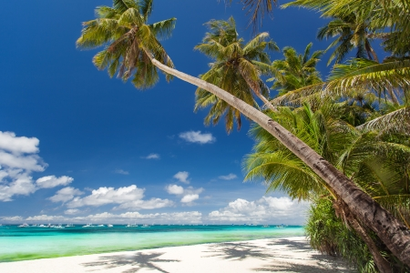 Tropical beach with palm and white sand, Philippines