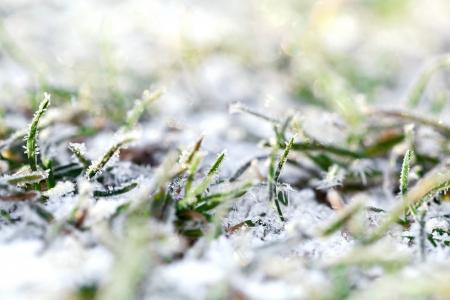 First snow on green grass photo