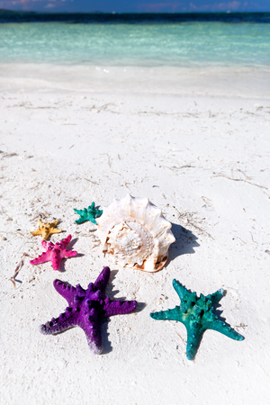 Colour starfishes on white beach photo