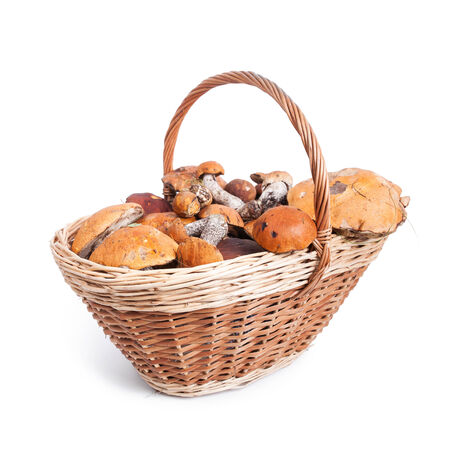 mushroom picking: Basket with different mushrooms from forest