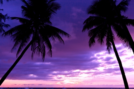 Colorful sunset on tropical beach with coconut palm trees photo
