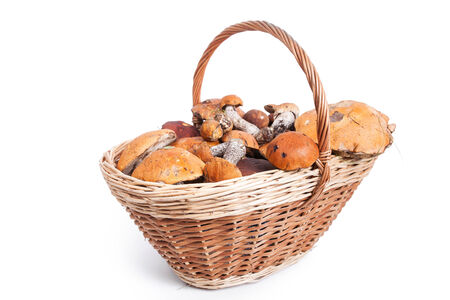 Basket with different mushrooms from forest, closeup on white background   photo
